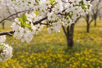 درختان می گویند بهار