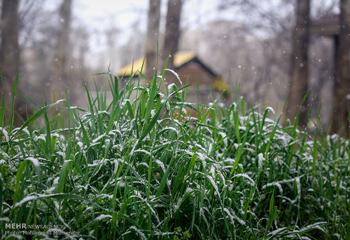 برف بهاری در اردبیل/دمای هوای ۵ شهر به زیر صفر رسید