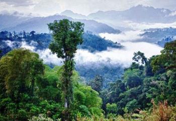 آیا می دانید درختان آمازون باران تولید میکنند!