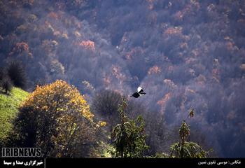 طبیعت پاییزی جنگل فندقلوی نمین- اردبیل