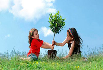 شناخت درخت و آموزش درختکاری