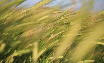 مزارع و زمینهای کشاورزی رنگارنگ اردبیل در قاب تصویر