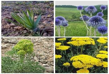 کشت ۷۰ گونه گیاه دارویی در اردبیل